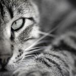 Pensions pour chats