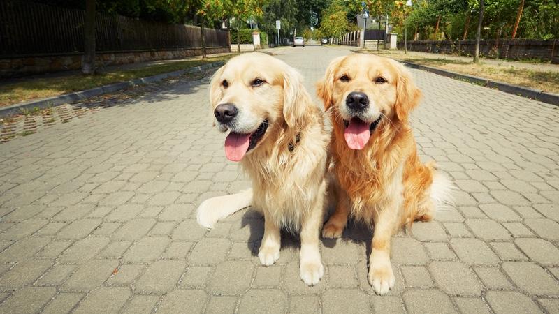 Deux chiens sous le soleil
