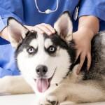 Un chien en consultation chez le vétérinaire
