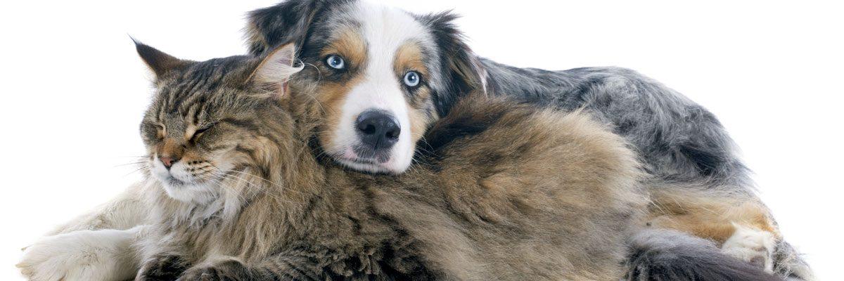 Services vétérinaires pour chiens et chats