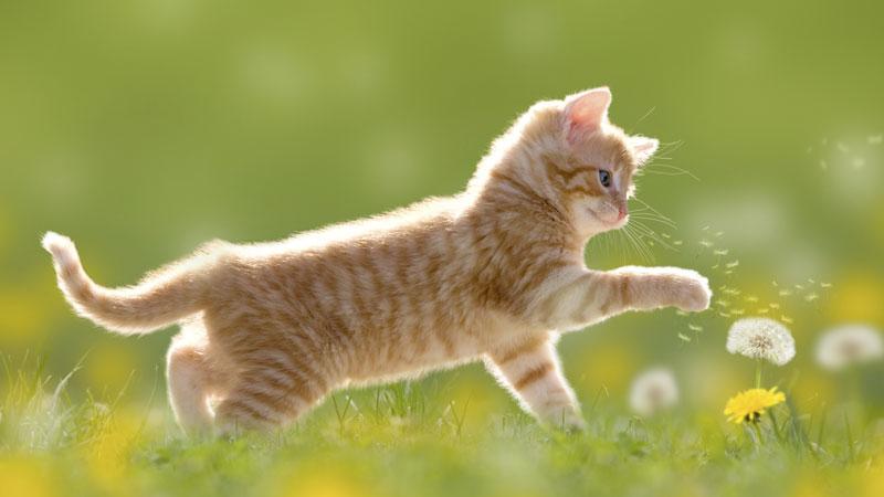Un chat joue avec une fleur