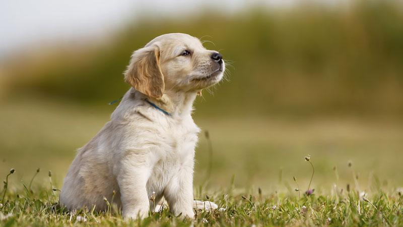 Protéger son chien des vers intestinaux