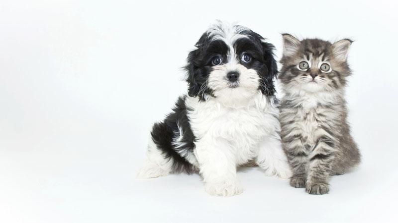 Un chiot et un chaton ensemble