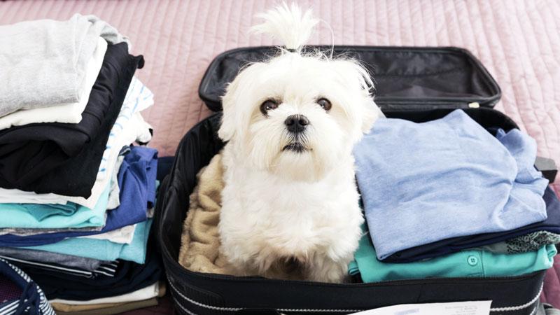 Voyager avec un chien ou un chat demande une bonne préparation